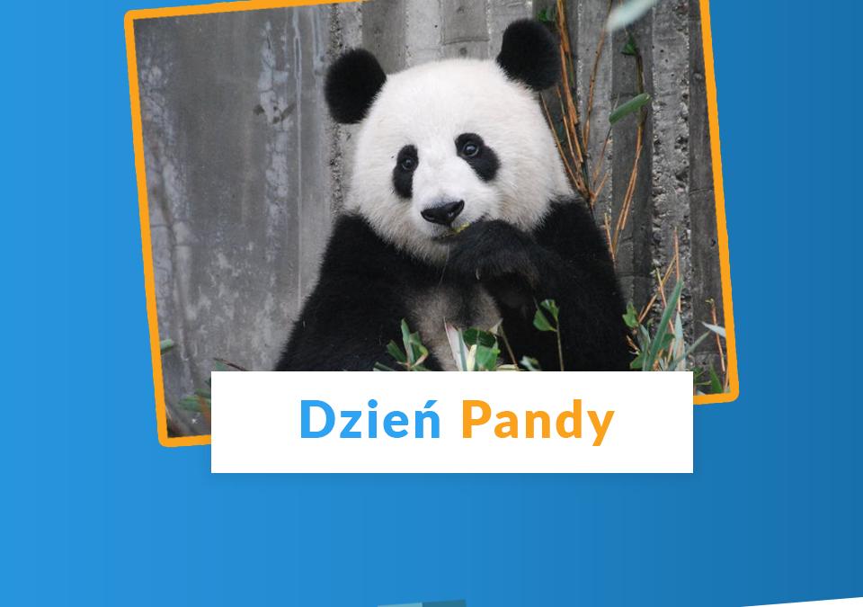Dzień Pandy