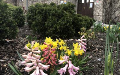 Prezenty od Pani Wiosny